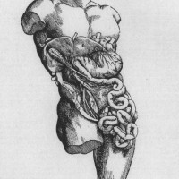 Andreas Vesalius drawing